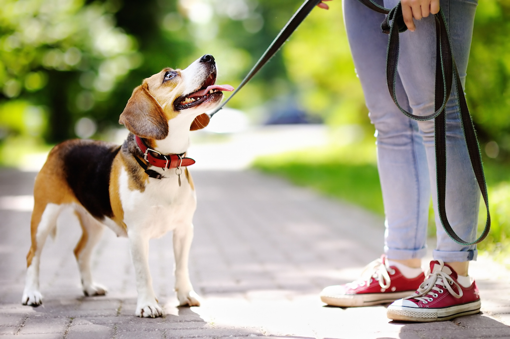 dog training with mindful pet parents