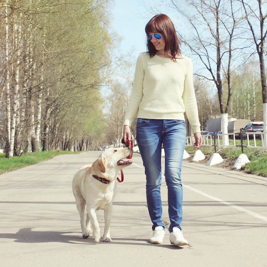 walking dog on leash with mindful dog parenting